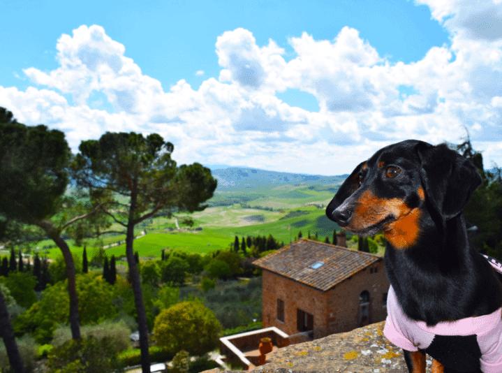 pet friendly hotel tuscany