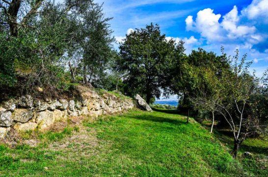 olive picnic-56